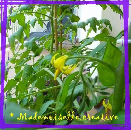 http://mademoiselle.creative.cowblog.fr/images/P1140514.jpg